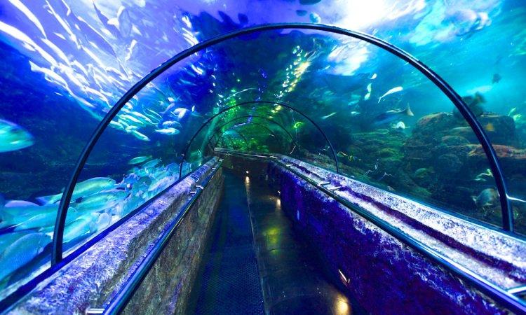 Sea World Ancol