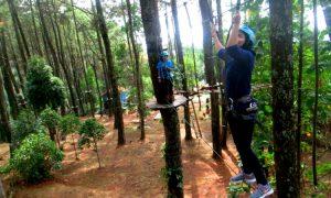 Kampung Pinus