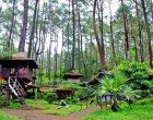 Rumah Pohon Jatiasih Bekasi