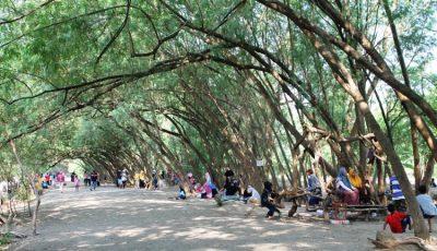 Pohon Miring Pancawati