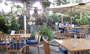Café Halaman