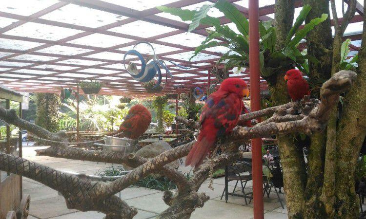 Bird and Bromelia Pavilion