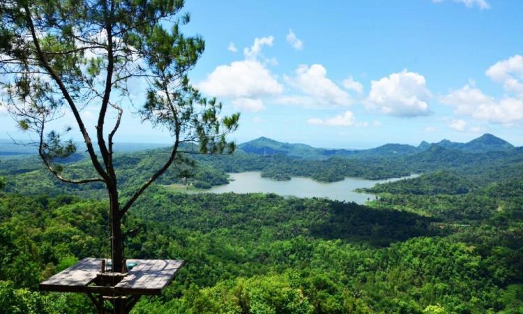 Puncak Becici Dlingo, Menikmati Panorama Alam Jogja dari Ketinggian
