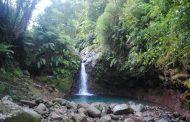 Curug Pangeran, Air Terjun Indah nan Menyegarkan di Tengah Hutan Bogor