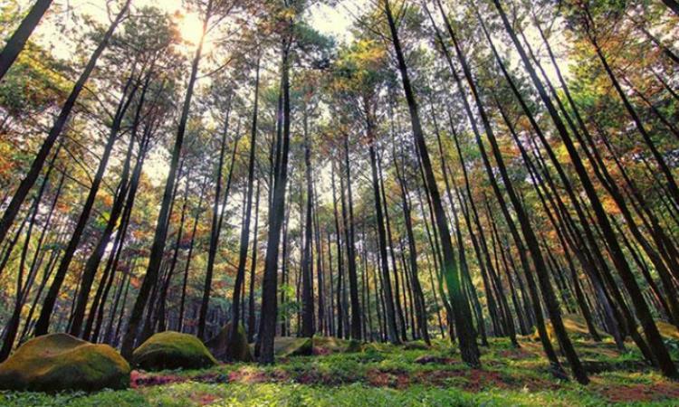 Daya Tarik Hutan Pinus Gunung Pancar