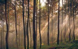 Hutan Pinus Gunung Pancar, Tempat Outbound & Camping Seru di Sentul Bogor