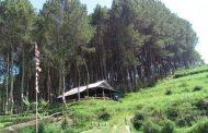 Karacak Valley, Menikmati Alam & Kesejukan Hutan Pinus di Garut