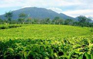 Agrowisata Gunung Mas, Kebun Teh dengan Beragam Wahana di Puncak Bogor