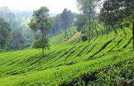 Puncak Bogor, Kawasan Wisata Pegunungan yang Menyejukkan di Cisarua