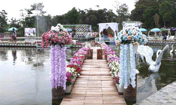 Daya Tarik Dimiliki Taman Bunga Celosia
