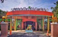 Semarang Zoo, Wisata Kebun Binatang & Edukasi yang Dilengkapi Wahana Permainan