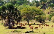 Taman Nasional Alas Purwo, Panorama Alam yang Sarat Sejarah di Banyuwangi